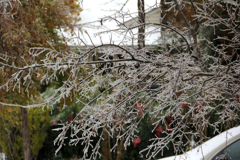 Dallas tree icemageddon | via @veritasphotog