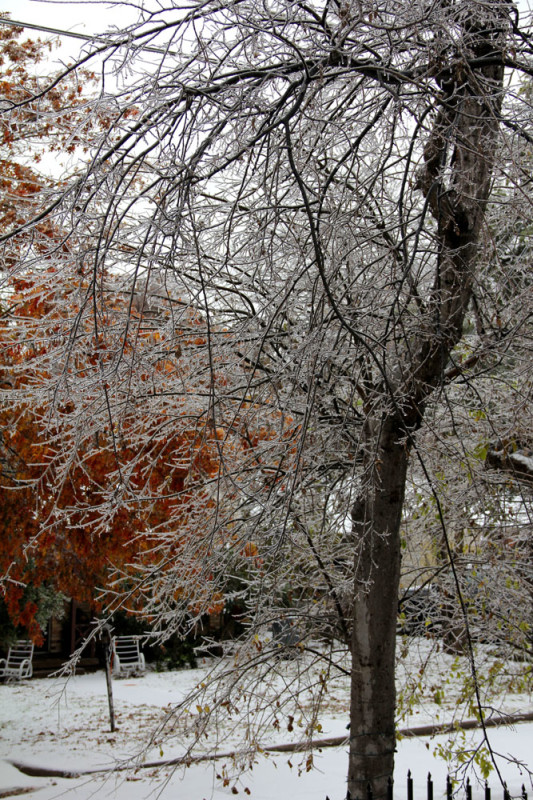 frozen tree oak cliff veritas photography | via @veritasphotog