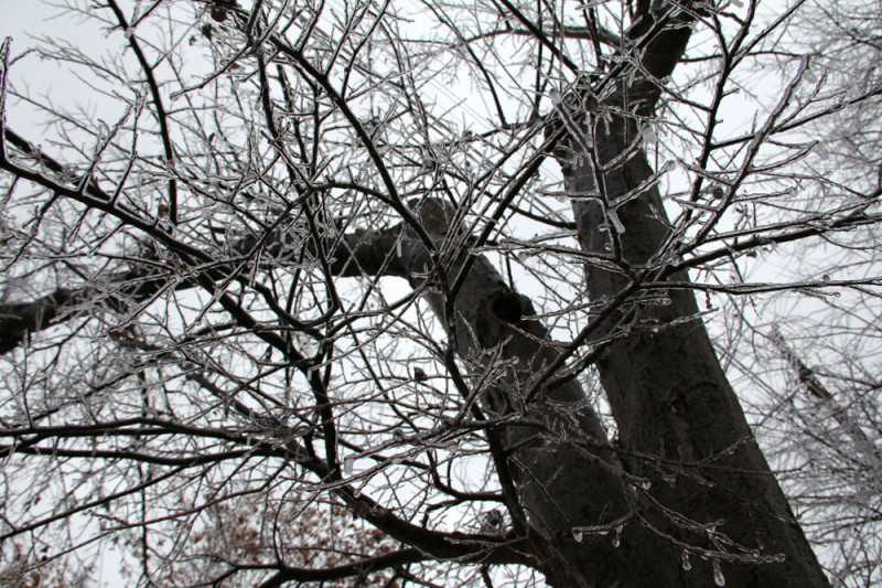 frozen tree dallas | via @veritasphotog