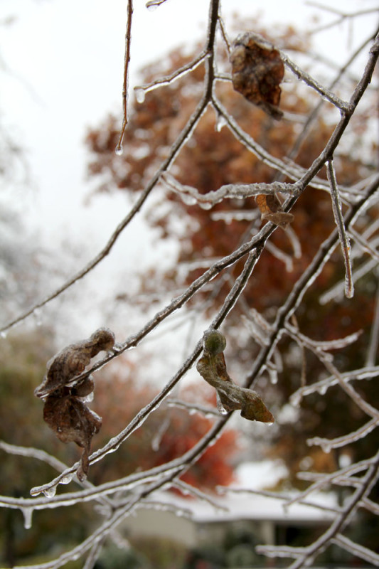 frozen brown leaf Veritas Photography | via @veritasphotog