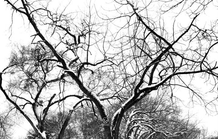 Black and white challenge snow in dallas |Veritas Photography